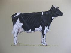 A champion Holstein cow commission  http://www.nicvickeryanimalartist.com/