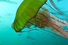 ocean streamers