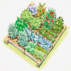 Fall Vegetable Garden Plan - Keep your garden productive as the season winds down with this fall-harvest garden plan:        Bell Pepper, Broccoli, Cabbage, Carrot, Cilantro, Dill, Green bean, Lettuce, Parsley, Snow pea, Spinach, Tomato