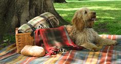 A Picnic with TBCo | The Tartan Blanket Co.