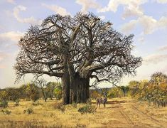 Errol Norbury South African Artist is best known for his detailed oil landscape and seascape paintings. Beautiful Forest, Beautiful Places, Baobab Tree, Old Trees, Tree Roots, Photo Reference, Wildlife Art, African Art, Country Roads
