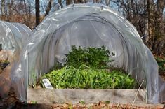 how to build a hoop house for fall/winter gardening.