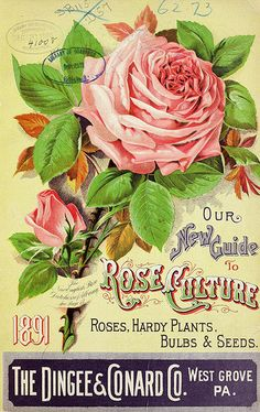 Our new guide to rose culture by Dingee & Conard Co. In: Biodirvesity Heritage Library. Garden Catalogs, Seed Catalogs, Vintage Labels, Vintage Ephemera, Bulbs And Seeds, Vintage Seed Packets, Garden Labels, Seed Packaging, Hardy Plants