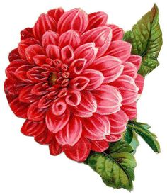 Flowers495