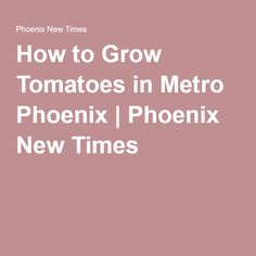 Tomato Pruning How to Prune Tomatoes for a Big Harvest - Bonnie Plants Growing Cherry Tomatoes, Green Tomatoes, Cherry Tomato Plant, Tomato Plants, How To Grow Cherries, Tomato Pruning, Tomato Farming, Tomato Garden, Garden Types