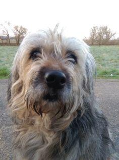 Hunde Foto: Thorsten und Shiva - Die treueste Seele Hier Dein Bild hochladen: http://ichliebehunde.com/hund-des-tages  #hund #hunde #hundebild #hundebilder #dog #dogs #dogfun  #dogpic #dogpictures