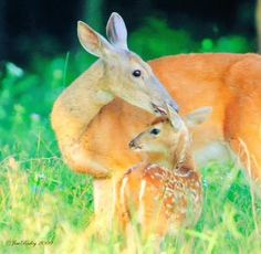 "@BeAwesome_Laugh ""Amazing Mother's Love!!...♡♡♡....!!"" pic.twitter.com/sNuRJuAV3h"