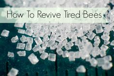 Handy advice on how to revive tired bees using a simple sugar and water solution.