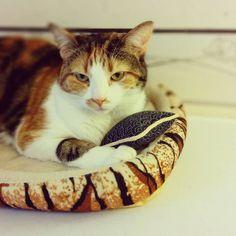Bobine a son propre coussin Bloup  #cat #catlover #atelier #ateliercouture  #workshop #work #team #coussin #cushion #deco #cousumain #sew #handmade #bloupcoussins #mif