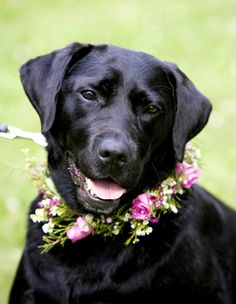 The bride's dog will wear a floral collar of jasmine vine, purple foliage, burgundy spray roses, and pink astrantia.