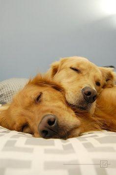 golden lovers