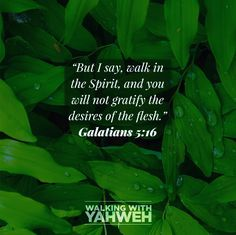 I don't know about you, but this verse used to scare me. In fact I used to read around Galatians 5 for that very reason. But what Paul is saying here is very different to what I perceived. Walk In The Spirit, I Don T Know, In The Flesh, I Am Scared, Facts, Sayings, Reading, Lyrics, Reading Books
