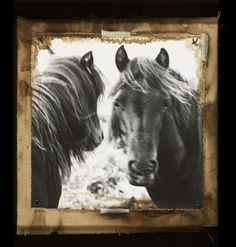 horses get the Starn twins treatment