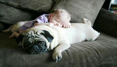 cuddle pug =]