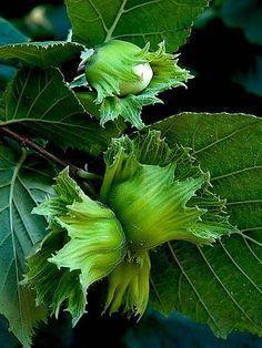 Couleur verte fruit