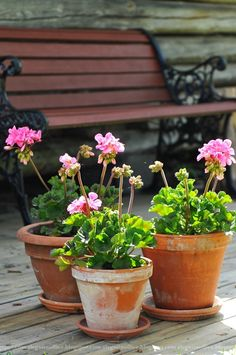 Geraniums are a great addition anywhere!  And they are so easy to grow...In front planters and boxes in back.