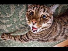 Video divertenti: i gatti piu pazzi del web - Spettegolando
