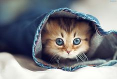 Things that make you go AWW! Like puppies, bunnies, babies, and so on. A place for really cute pictures and videos! Cute Kittens, Baby Animals, Funny Animals, Cute Animals, Teacup Kitten, Kitten Drawing, Ocicat, Types Of Cats, Devon Rex