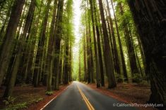 Avenue of the Giants: The 31 Mile Redwood Drive You Have to Do - California Through My Lens Congaree National Park, Grand Teton National Park, National Parks, Ludington State Park, Mount Desert Island, Redwood Forest, The Perfect Getaway, Mountain States, Road Trippin