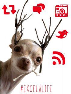 #HolidayHappy #excelamktg
