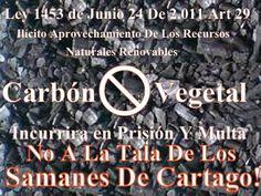 Vía @JorgeEMoncadaA: No A La Tala De Los Samanes De Cartago #SamanesDeCartago Empecemos por una #PazVerde