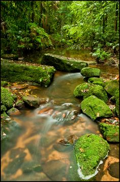 Strickland State Forest in NSW, Australia. Photo: Bronwyn Ellis for Forests NSW