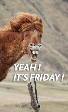 friday horse