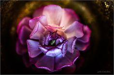 https://www.etsy.com/de/listing/219245851/blumen-fotografie-golden-violet-flower