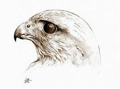 A MAGYARSÁG A MAG NÉPE: Milyen madár volt a turul?
