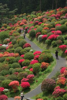 Azalea Festival, Shiofune Kannon-JI Temple, Tokyo, Japan www. Beautiful Streets, Beautiful World, Beautiful Gardens, Beautiful Flowers, Beautiful Places, Japanese Garden Landscape, Japanese Gardens, Parcs, Dream Garden