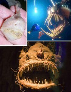 pictures of strange ocean animals | Wet, Wild & Weird Deep Sea Animal Wonders | WebEcoist
