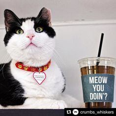 """The feline-focused world has been waiting rather impatiently for Los Angeless first-ever cat cafe to arrive. The good news is they wont have to suffer much longer.  @crumbs_whiskers will arrive by September 30 nearby the corner of Melrose and Fairfax Avenues.  They even have a couple of well-placed slogans: Cats Before Bros (painted on the wall) and one of those ubiquitous neon sign that reads """"COFFEE AND CATS PLEASE."""" Via @curbed  #meowyoudoin  #Repost @crumbs_whiskers with @repostapp…"""