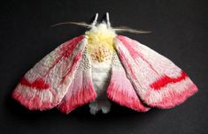 Fabric sculpture -Large Clouded Crimson Moth textile art - yumi okita by Art Fibres Textiles, Textile Fiber Art, Sculpture Textile, Soft Sculpture, Fabric Birds, Fabric Art, Cotton Fabric, Needle Felted, Insect Art