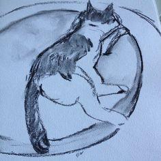 A gata ainda dormindo The cat still sleeping sketch charcoal dwgdaily