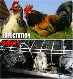 9 billion are slaves to plates each year. They all live horrible, horrible lives. And then die a horrible death
