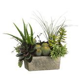 Found it at Wayfair - Succulents Desk Top Plant in Planter
