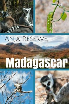 In Madagascar's Anja Reserve, ring-tailed lemurs are everywhere. Which is incredible because, less than 20 years ago, they were in danger of disappearing forever. Africa Destinations, Travel Destinations, Travel Tours, Travel 2017, Travel Ideas, Madagascar Travel, African Safari, East Africa, Africa Travel