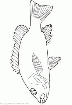 Google Images Clip Art free of fish | fish outline image
