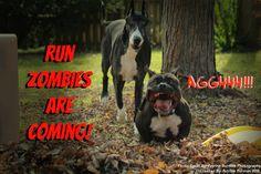 #TheWalkingDead #Walkers #TWD #zombies #ilovezombies #greatdane #americanbully #dogs #furryfriends #funny #hilarious #walkingdeadfam