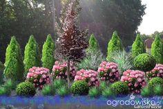 Czy facetowi uda się wyczarować ogród marzeń? - strona 2 - Forum ogrodnicze - Ogrodowisko