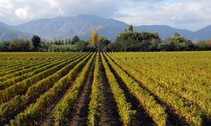 Viu Manent ~ Valle de Colchagua, Chile