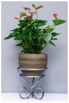 Anthurium and one of our plant pot stand. House Plants Decor, Plant Decor, Hanging Plants, Indoor Plants, Metal Plant Stand, Wrought Iron Decor, Iron Plant, Garden Deco, Iron Furniture