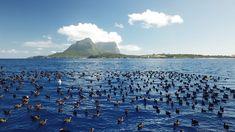 Marine plastic: Hundreds of fragments in dead seabirds - BBC News