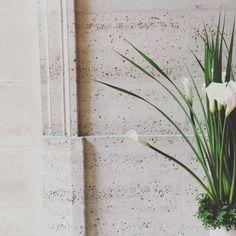 Gringoire - Les fleurs de Drissia