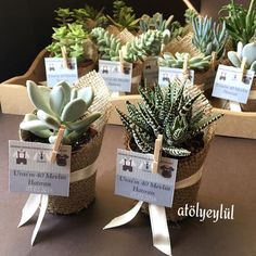 Places for special events Plant Wedding Favors, Cactus Wedding, Wedding Favors For Guests, Wedding Gifts, Baptism Decorations, Birthday Party Decorations, Recycled Wedding, First Communion Favors, Recycled Gifts