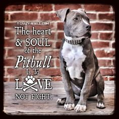 "The heart & soul of a Pit Bull is to LOVE....not to fight!!!! Duh!!!! Anyone who has owned (or even known) a Pit Bull knows this!!!! The ONLY warning I give about my Pit is ""she WILL lick ur face""!!!!"