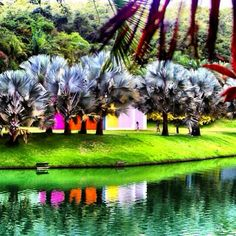 Inhotim, em Brumadinho (MG), é um lugar onde a arte convive com as belezas da natureza. Conheça! Foto: @liliansalomao