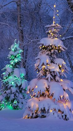 Christmas trees phone wallpaper for iphone ipad android and windows mobile christma