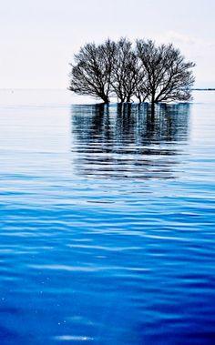 Reflection, Lake Biwa, Japan #tree #lake #blue #nature #photography