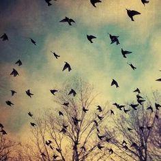 Freedom :P